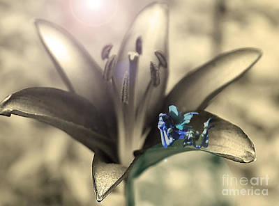 Photograph - Blue Lily Fairy by Nina Silver