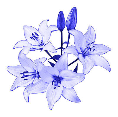 Photograph - Blue Lily by Jane McIlroy