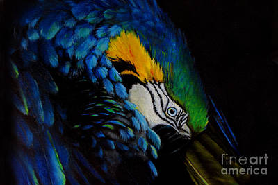 Amazon Parrot Painting - Blue Macaw by Nancy Bradley