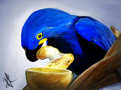 Photograph - Blue Macaw by Pennie  McCracken