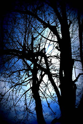 Photograph - Blue Maple  by Kathy Sampson