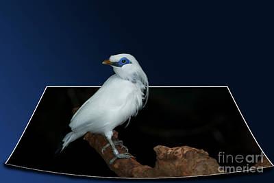 Blue Mask Bandit Bird Art Print by Thomas Woolworth