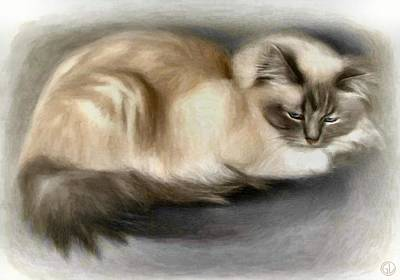 Blue Masked Birman Art Print