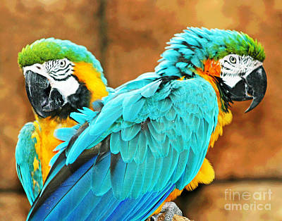 Photograph - Blue Mccaws by Larry Oskin