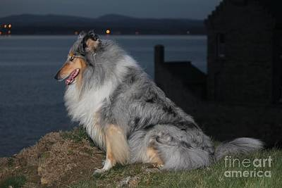 Photograph - Blue Merle Collie by David Grant