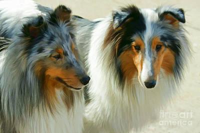 Shetland Sheepdog Digital Art - Blue Merle Shelties by Carolyn Krek