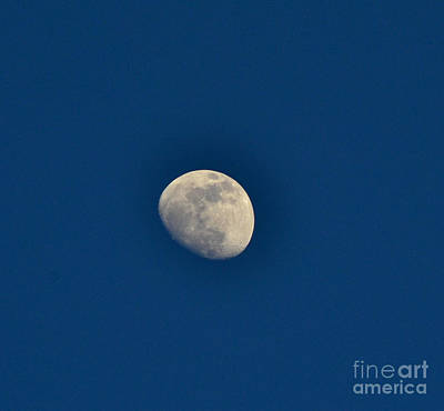 Photograph - Blue Moon by Derry Murphy