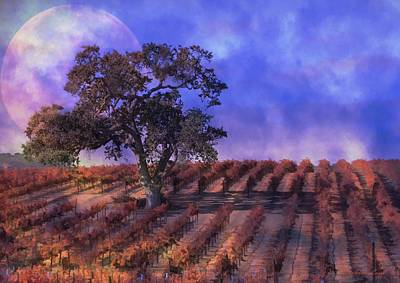 Vino Photograph - Blue Moon Vineyard by Stephanie Laird
