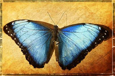 Blue Morpho Butterfly  Art Print by Saija  Lehtonen