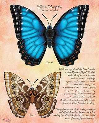 Painting - Blue Morpho Butterfly by Tammy Yee