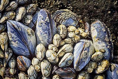 Blue Mussels Art Print by Kelley King