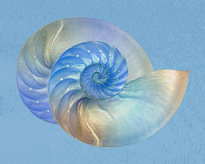 Blue Nautilus Pair - Horizontal Art Print by Gill Billington