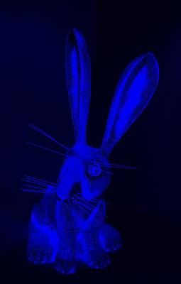 Photograph - Blue New Mexico Rabbit by Rob Hans