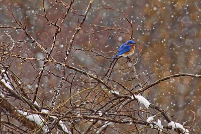 Art Print featuring the photograph Blue Norther by Gary Holmes