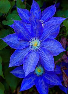 Blue On Blue Art Print