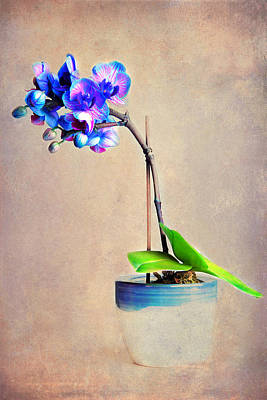 Photograph - blue Orchid by Angela Bruno