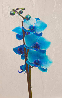 Blue Orchid Art Print by Scott Carruthers