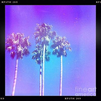 Del Mar Photograph - Blue Palms by Denise Railey