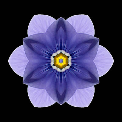 Print featuring the photograph Blue Pansy I Flower Mandala by David J Bookbinder