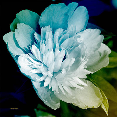 Mixed Media - Blue Peony Flower Art by Christina Rollo