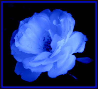 Photograph - Blue Perfection by Kathy Sampson
