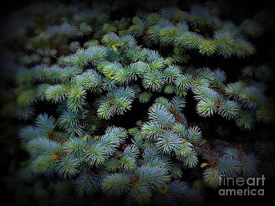Photograph - Blue Pine by Miriam Danar