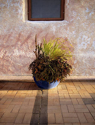 Photograph - Blue Planter Morning Sun by Ann Powell