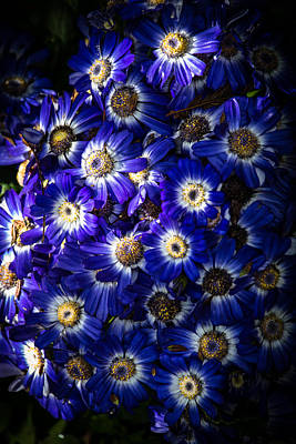 Photograph - Blue Poem by Edgar Laureano