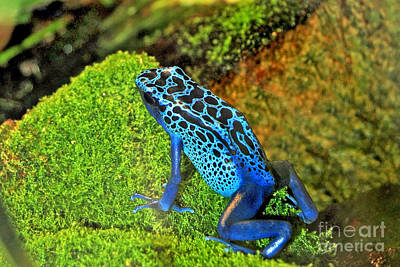 Digital Art - Blue Poison Dart Frog by Eva Kaufman