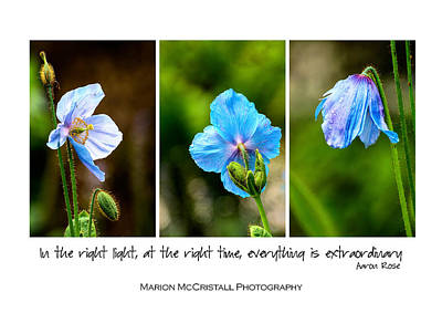 Blue Poppies Poster Art Print