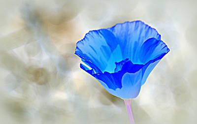 Photograph - Blue Poppy by AJ  Schibig