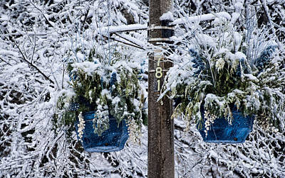 Photograph - Blue Pots After Ice And Snow Storms by Gerda Grice