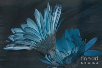 Photograph - Blue Radiance by Bianca Nadeau