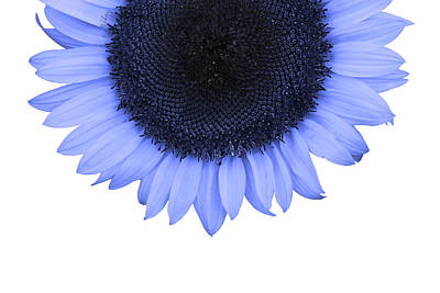 Photograph - Blue Raspberry Sunflower by Fran Riley