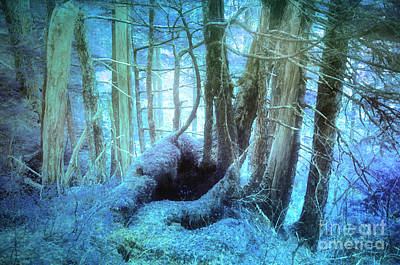 Forest Floor Photograph - Blue Reveries by Tara Turner