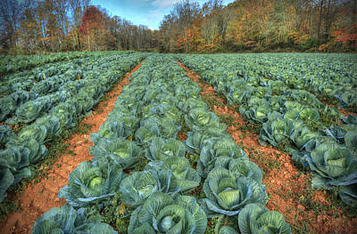 Blue Ridge Cabbage Patch Art Print by Jaki Miller