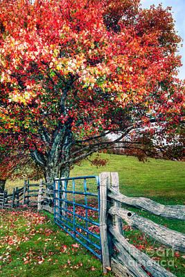 Blue Ridge - Fall Colors - Autumn Maple Tree Fence Gate I Art Print by Dan Carmichael