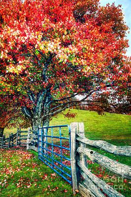 Painting - Blue Ridge - Fall Colors - Autumn Maple Tree Fence Gate II by Dan Carmichael