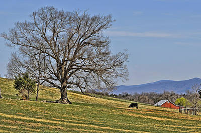 Country Scene Photograph - Blue Ridge Farm by Lara Ellis