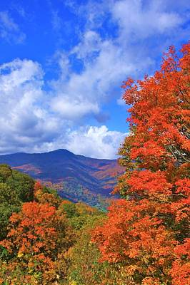 Photograph - Blue Ridge Foliage by Mountains to the Sea Photo
