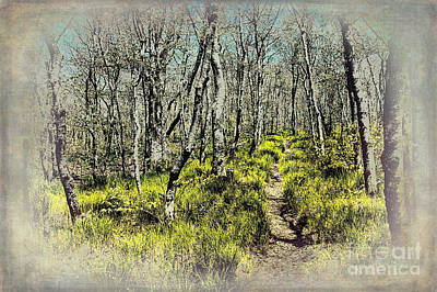 Blue Ridge Mountains Hiking Trail II Art Print