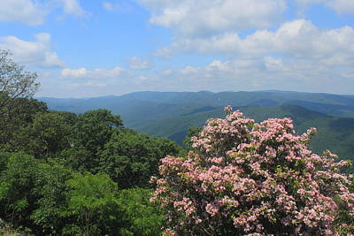 Photograph - Blue Ridge Mountains Mountain Laurel by John Burk