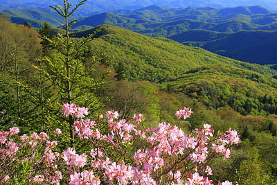 Blue Ridge Parkway Rhododendron Bloom- North Carolina Art Print by Mountains to the Sea Photo