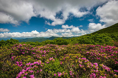 Blue Ridge Parkway Spring Flowers - Spring In The Mountains Art Print