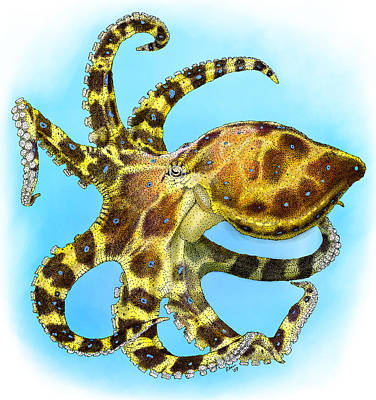 Photograph - Blue Ringed Octopus by Roger Hall