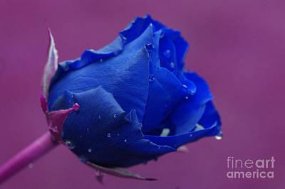 Purple Flowers Digital Art - Blue Rose by Carol Lynch