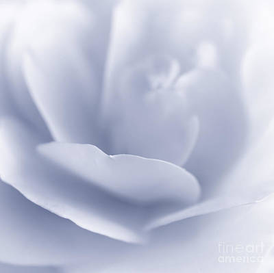 Photograph - Blue Rose by Charline Xia
