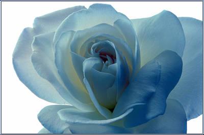Blue Rose. Original by Terence Davis