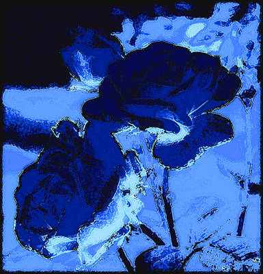 Photograph - Blue Roses by Kathy Sampson
