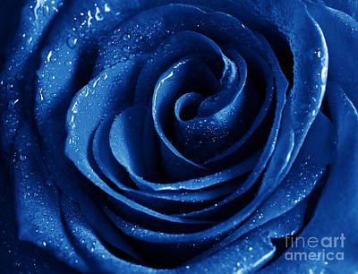 Blue Roses Pictures Art Print by Boon Mee